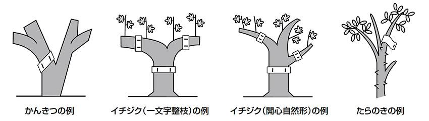 バイオリサの設置方法